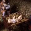 nativitycloseup